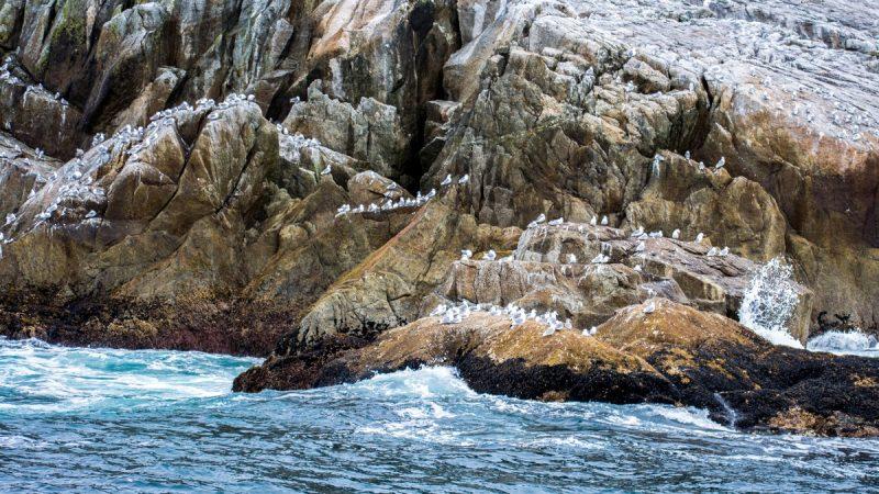 Puffins - Kenai Fjords Tour