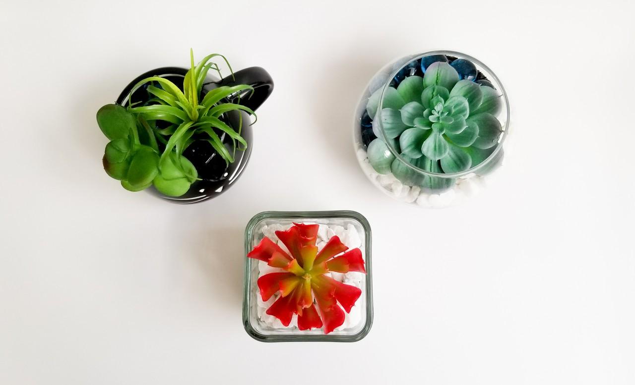 DIY Adorable Succulent planter